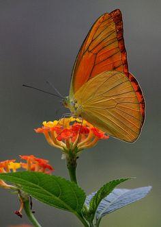 ~~butterflies by mypic's~~