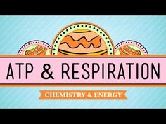 ▶ ATP & Respiration: Crash Course Biology #7 - YouTube