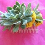 succulent-hair comb