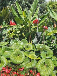 Designing with Plants – Sandra Batley You are in the right place about tropical garden ideas outdoor Small Tropical Gardens, Tropical Garden Design, Tropical Landscaping, Small Garden Design, Landscaping Ideas, Front Door Plants, Balinese Garden, Garden Inspiration, Garden Ideas