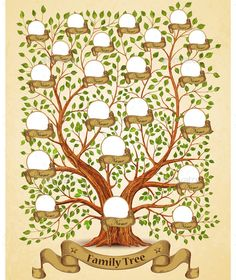 25 best family tree images in 2018 family trees family tree free