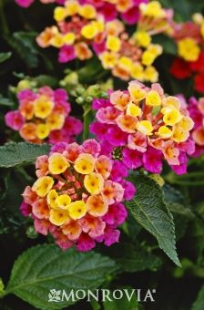 42 Best Waterwise Plants Images Plants Water Wise Garden