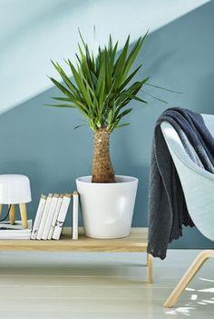Indoor Plants Clean Air, Yucca, Mason Jar Bathroom, Perfect Plants, Low Lights, Live, House Plants, Bean Bag Chair, Planters