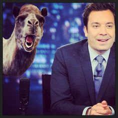Today is national talk show host day- seriously- we're keeping our fingers crossed that #latenight interviews #mike! #happy #humpday