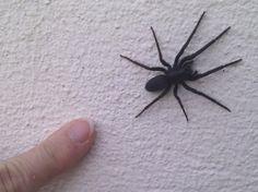 Un répulsif naturel et efficace contre les araignées ! noté 4 - 3 votes Les araignées ne vous ont jamais fait le moindre mal mais rien n'y fait : vous ne supportez pas de cohabiter avec elles. Si vous souhaitez les chasser sans leur faire de mal, apprenez à réaliser un répulsif naturel qui vous permettra …