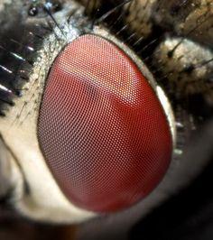 Increibles cosas sobre los insectos - Taringa!