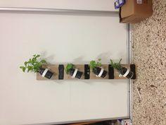 DIY indoor herb garden #masonjar #blackboardpaint to write the name of the herb #be.DIY2013