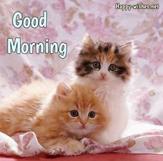 Cute Cats and Kittens Pictures and Wallpapers Cute Funny Kitten Picture Very Cute Cat and Kitten Picture Cute White-Brown Ki. Small Kittens, Cute Cats And Dogs, Cute Cats And Kittens, Kittens Cutest, Small Cat, Good Morning Cat, Pet Dogs, Dog Cat, Kitten Wallpaper