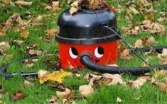 The Commercial Leaf Vacuum will not just help you to clear fallen leaves. Fallen Leaves, Autumn Leaves, Best Vacuum, Commercial, Home Appliances, Bird, Outdoor Decor, Home Decor, House Appliances