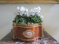Jardiniere Frankreich 19 Jh.Rosenholz,feuervergoldete Bronze,porzellan Medallion