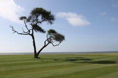 Golf Course, Daufuskie Island, SC #golf