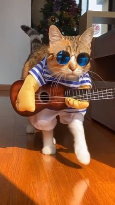 Dog Mom Discover Funny Pets Play Guitar Cosplay Costume Make your dog a street star. Its a great gift for vacation and entertainment.Creative and funny guitarist make your pet stand out again. Funny Animal Jokes, Funny Animal Photos, Cute Animal Pictures, Funny Animal Videos, Cute Funny Animals, Animal Memes, Funny Cats, Videos Funny, Mom Funny