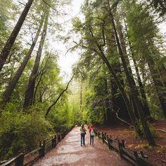 Caliparks : Big Basin Redwoods State Park Big Basin Redwoods, Local Parks, Park Photos, Park City, San Jose, Regional, State Parks, Planets, Paradise