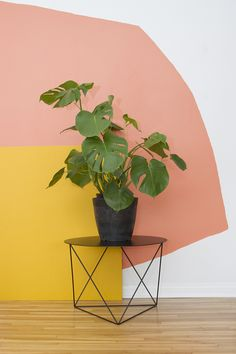 Copper orange yellow wall with plant on Octahedron Side Table