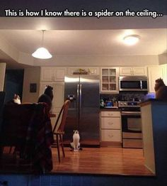 The Spider Detectors are working great.