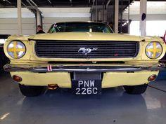 Yellow Mustang