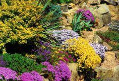 Byliny, które tworzą zwarte niskie kępy, w czasie kwitnienia ożywiają i rozweselają ogród. Wyglądają przy tym jak miękkie kolorowe jaśki.