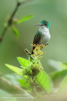Andean Emerald by Juan Carlos Vindas on 500px