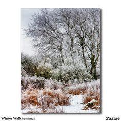 Winter Walk Postcard