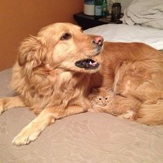These funny dogs and cats are on a undertaking to make you smile.See more ideas about Funny animals, Dog cat and Cute animals.Read This Top 24 Funny Cats and Dogs Best Cat Memes, Cat And Dog Memes, Funny Animal Memes, Funny Animal Pictures, Cute Funny Animals, Funny Cute, Funny Dogs, Cute Cats, Dog Pictures