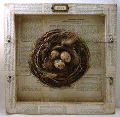 birds nest shadow box