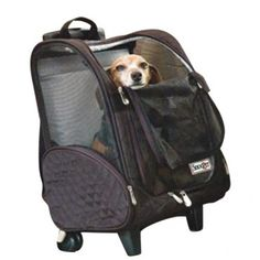 The Snoozer Wheel Around Travel Pet Carrier is a comfortable and convenient way to carry your pet while travelling. This pet carrier is compact to carry in a car or airplane.nnThe Wheel Around Travel Dog Travel Carrier, Airline Pet Carrier, Cat Carrier, Pet Travel, Travel Bag, Dog Stroller, Pet Car Seat, Car Seats, Trolley Case