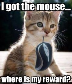 I got the mouse... where is my reward?