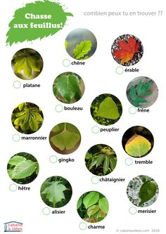 Search game and find. The goal: to look for the different tree species da . Montessori Science, Preschool Math, Alternative Education, Forest School, Learn French, Land Art, French Language, Summer Activities, Science And Nature