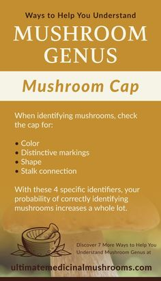 If you want to know if a mushroom is poisonous or not, one of the first thing you should look at is its cap. Many mushrooms show their distinctions through their caps, like morel for instance. False morel, which is the poisonous variety has a irregularly shaped cap. | Discover more about medicinal mushrooms at ultimatemedicinalmushrooms.com #huntingmushrooms #foragingmushrooms #poisnousmushrooms #ediblemushrooms Poisonous Mushrooms, Edible Mushrooms, Growing Mushrooms, Stuffed Mushroom Caps, Stuffed Mushrooms, Mushroom Identification, White Button Mushrooms, Mushroom Varieties, Mushroom Hunting