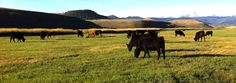 Tomichi Creek Natural Beef - Gunnison, CO #colorado #GunnisonCO #shoplocal #localCO