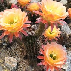 Tucson's Arizona - Plant and Animal Lovers - prepare to be amazed!       (Photo via Instagram by @grace.celeste)