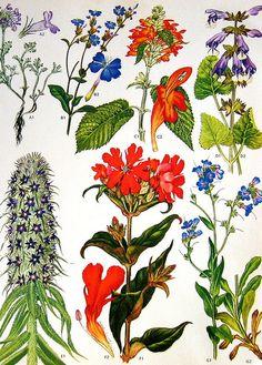 Vintage Botanical Prints 105 by ninainflorida, via Flickr