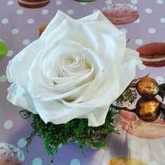 ❤ PROMO NOEL Avec le code MOINS20 Réduction sur votre commande de 20% Sur toute la boutique artifleurs-fleurs-artificielles.com