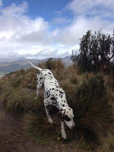 """Milo at the Summit of Pasochoa, Ecuadorian Andes"" by Laura Catania, 25, of Arlington via The Washington Post Travel Photo Contest: Animal Photos - designyoutrust"