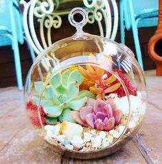 Adorable Pink and Green Succulent Plants - Terrarium Container , Table Centerpiece