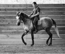 Blog - Pure Classical Dressage
