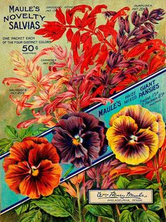 1914 Seed Book - Maule's seed catalogue / - Biodiversity Heritage Library. #BHLinbloom