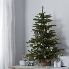 Potted Spruce Christmas Tree - 3ft | The White Company UK | 12 ...