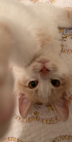 This sweet kitten wanted my attention! I Love Cats, Cute Cats, Funny Cats, Kittens Cutest, Cats And Kittens, Siamese Cats, Cute Baby Animals, Funny Animals, Gato Gif