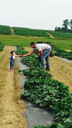 #Agricultura #Ganadería #Agriculture #Cattle