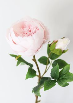 Find beautiful artificial wedding flowers, like this soft pink silk peony with a bud. A pretty pastel color for your DIY spring flower bouquets! Light Pink Tall x Bloom Silk Wired Stem Shop All Silk Peonies Spring Flower Bouquet, Peony Flower, Spring Flowers, Flower Bouquets, Peony Plant, Rare Flowers, Silk Flowers, Beautiful Flowers, Light Pink Flowers