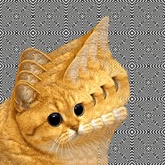 Here trippy kitty, trippy kitty! LOL