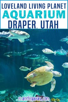 Are you thinking of going to the Draper Aquarium? The Loveland Living Aquarium is amazing! This is one attraction to add to your Salt Lake City itinerary. The Living Planet Aquarium is actually located in Draper, Utah which is just south of Salt Lake City. The aquarium is always expanding and making things better and better! | Planning Away @planningaway #lovelandlivingplanet #draperaquarium #familyvacationutah #utahvacation #utahroadtrip #planningaway