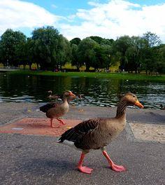World Images, Funny Animals, Birds, Stock Photos, Park, Nature, Naturaleza, Funny Animal, Bird