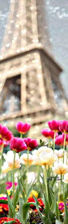 ❇Téa Tosh❇  Tulips blooming in March. Eiffel Tower, Paris