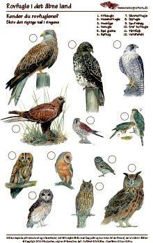 Kender du rovfugle i det åbne land Toddler Learning, Teaching Kids, Nature Hunt, Nostalgic Pictures, Tree Identification, Prehistoric Creatures, Animal Posters, Animal Facts, Home Schooling