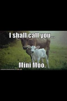 Everyone needs a mini moo Animals And Pets, Baby Animals, Funny Animals, Cute Animals, Farm Humor, Funny Farm, Country Girl Quotes, Animal Jokes, All Gods Creatures