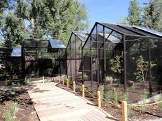Rare Birds Exhibit @ Tracy Aviary - Utah