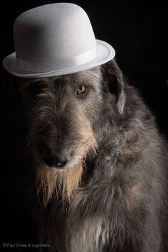 Irish Wolfhound - Tommy dei i Mangialupi by Paul Croes & Inge Nelis #animals #dogs #irishwolfhound #paulcroes