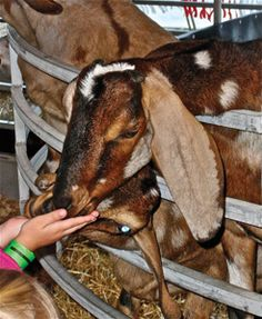 PETTING ZOO & PONY RIDES | South Florida Fair